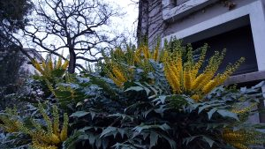 Flowers, plants, Bonn Germany